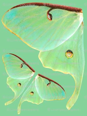 Luna Moth Oversized Costume Panel