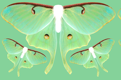 Luna Moth Oversized Costume Panel fabric by lovelylepidoptera on Spoonflower - custom fabric