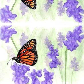butterfly-ed-ed