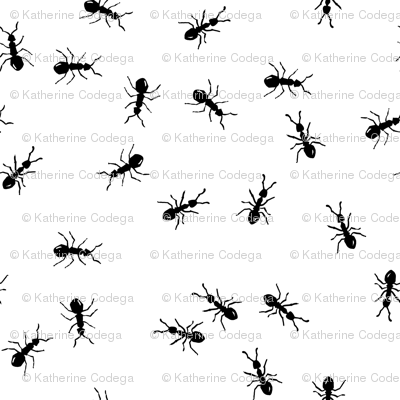 ants marching - large scale