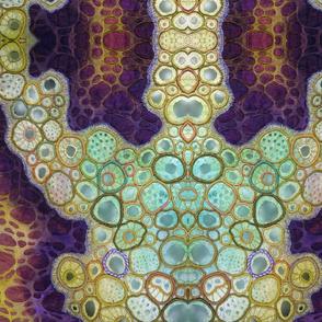 multicellular_dtl