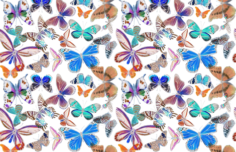 Butterfly Bounty Colorized fabric by angelaanderson on Spoonflower - custom fabric