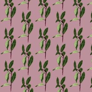 Wild Mint Pink