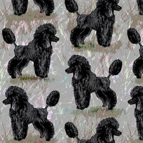 Black Poodle on Pastels 2