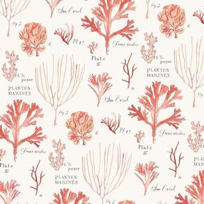 seaweed_pattern_2