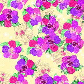 Cream Hibiscus