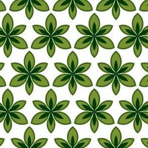 circular foliage 3m