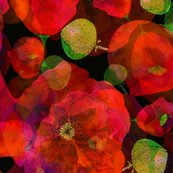 Rrrpoppies_on_black_layered_4600_shop_thumb