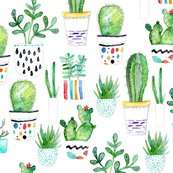 Rsucculents_shop_thumb