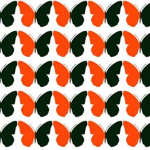 contrasting_butterflies