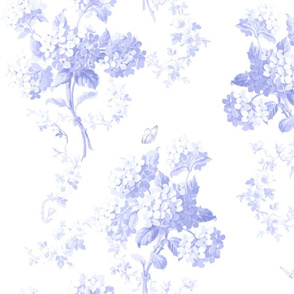 Edwina BlueViolet on white