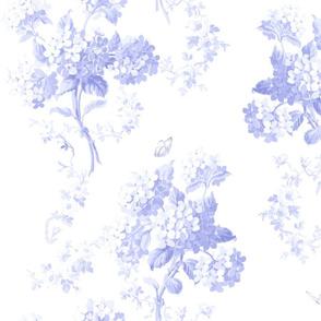 Edwina BlueViolet on white