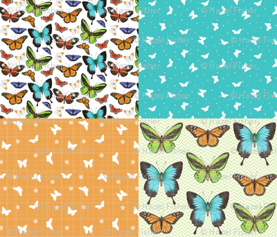Butterflies Coordinate