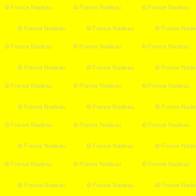 Butterfly_Garden_yellow_solid