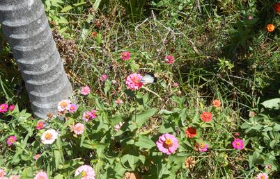 Flights of Butterfly Fancies in the Fairy Garden - Panel(Ref. 0350b) fabric by rhondadesigns on Spoonflower - custom fabric