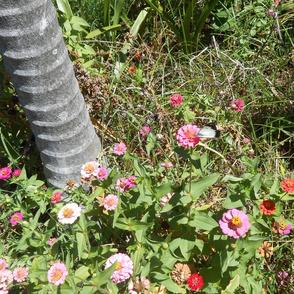 Flights of Butterfly Fancies in the Fairy Garden - Panel(Ref. 0350b)