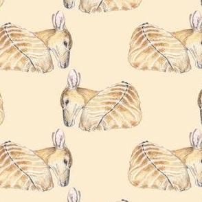 Nyala Antelopes