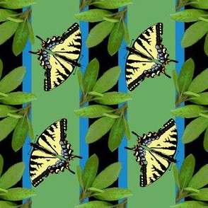 butterfly_stripe_2_plus_leaves