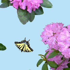 Tiger_Swallowtail_butterflies_and_Rhododendron_collection_A