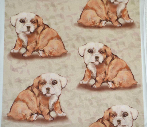 Bulldog Puppy with viny background