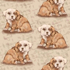 Bulldog Puppy with viny background