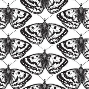 Monochrome Flutterings