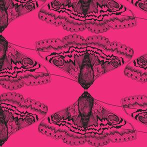 Punk Lace Flutterings