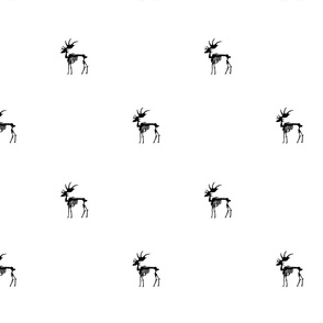 moose bones