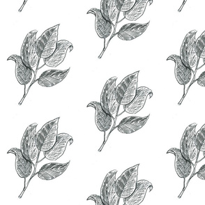 Sketches_july2015_Page_01_leaves_line_art