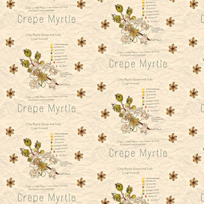Crepe Myrtle Study