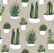 Rgreen_and_white_cacti_more_complex_colour_change_shop_thumb