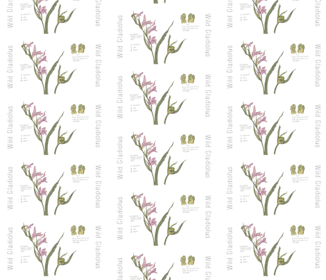Wild Gladiolus with Seed Pod fabric by ccreechstudio on Spoonflower - custom fabric