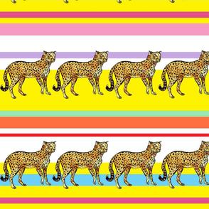 cheetah_stripes_rainbow