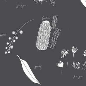 Australian Native Flora Botanical_chalkboard
