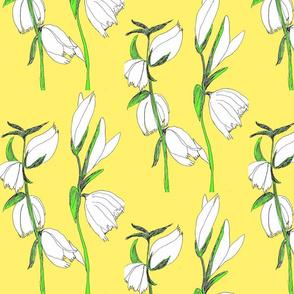 Lillium Yellow