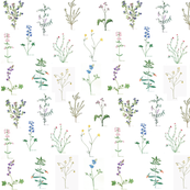 Botanical_Sketchbook_2015_-_Nanas_Dozen