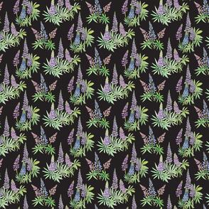 Lupine clusters-black