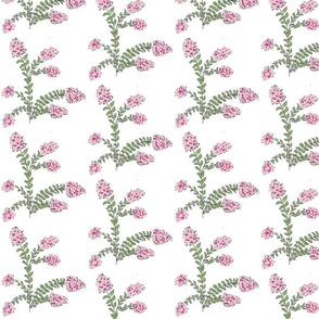 Crepe Myrtle Garden -petalberry