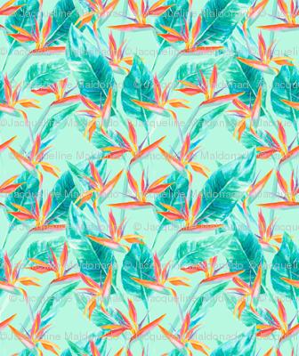 Birds of Paradise Mint