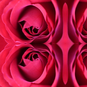 Rose Within