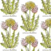 Cheerful Dandelion