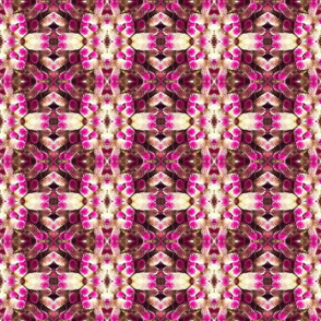 Maleny Garden Pink