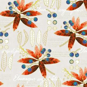Sketchbook - Elaeocarpus angustifolius