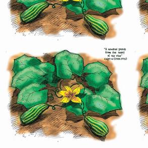 gourd_plant_copy