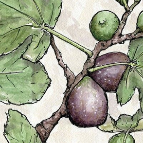 Watercolor Figs