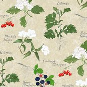 Botanical_sketchbook_neigborhood_shop_thumb