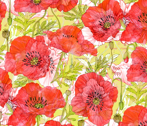 Romance Poppies Botanical Sketchbook fabric by robinpickens on Spoonflower - custom fabric