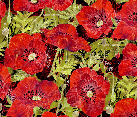 Romance Poppies Botanical Sketchbook_Dk fabric by robinpickens on Spoonflower - custom fabric