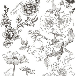 Spoonflower_Botanical_Sketchbook_Pen