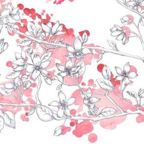 Wild Apple Tree flowers